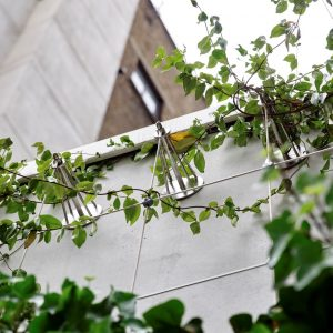 Improve your wealth by planting a green wall!
