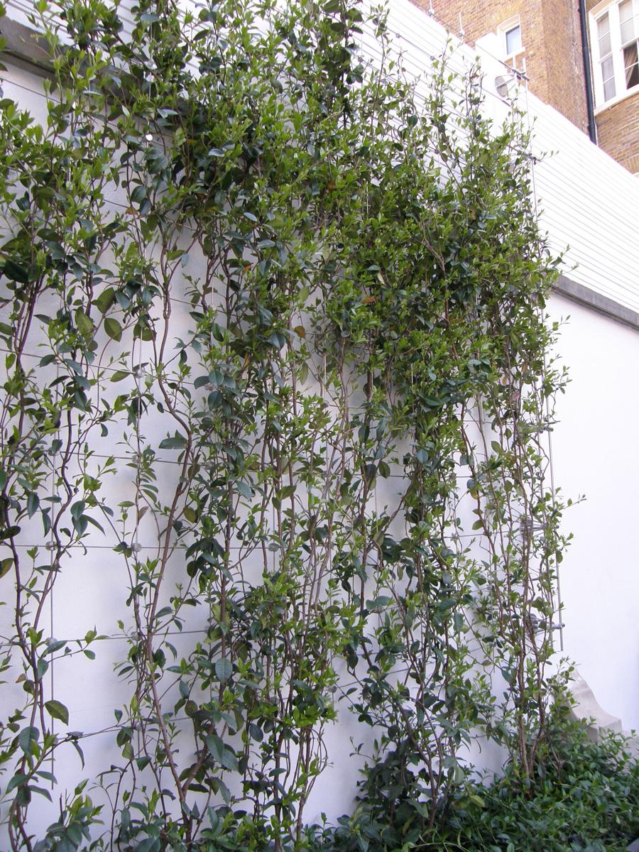 Garden-Design-stainless-steel-wire-trellis-(33) - Jakob
