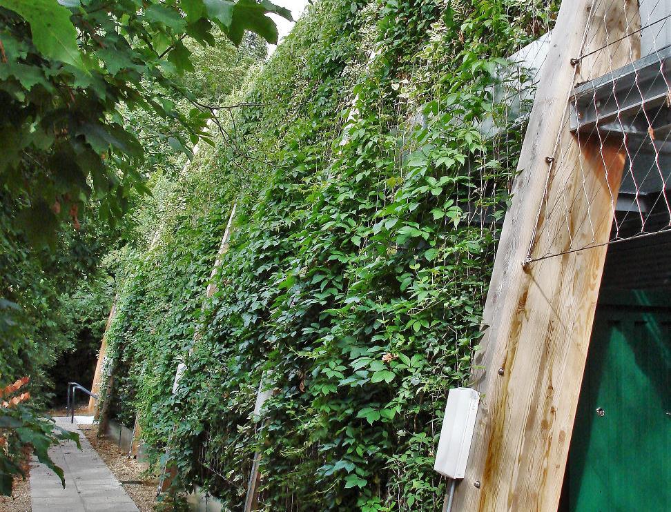St. Dominics Jakob Green Wall