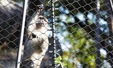 Animal Enclosures